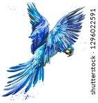 blue lear macaw. tropical bird... | Shutterstock . vector #1296022591