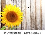 sunflower and rustic wooden... | Shutterstock . vector #1296420637