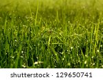 the rice field in the morning   Shutterstock . vector #129650741
