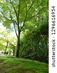 tree green day | Shutterstock . vector #1296616954