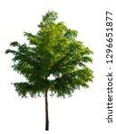 trees on white background. ... | Shutterstock . vector #1296651877
