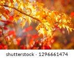 golden leaves at golden hour on ... | Shutterstock . vector #1296661474
