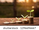 growing money  plant on coins... | Shutterstock . vector #1296696667