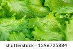 fresh cut leaves of green... | Shutterstock . vector #1296725884