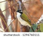 bird in tree | Shutterstock . vector #1296760111