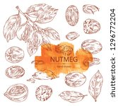 collection of nutmeg  nut and...   Shutterstock .eps vector #1296772204