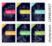 beautiful vector hand herbal... | Shutterstock .eps vector #1296814927