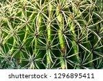 closeup image of a globe shaped ...   Shutterstock . vector #1296895411