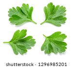 parsley. parsley isolated. top... | Shutterstock . vector #1296985201