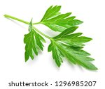 parsley. parsley isolated. | Shutterstock . vector #1296985207