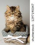 beautiful persian kitten cat... | Shutterstock . vector #1297190347