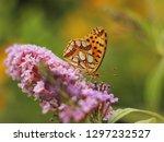 butterfly feeding on buddleia... | Shutterstock . vector #1297232527