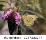 beautiful butterfly on... | Shutterstock . vector #1297233247