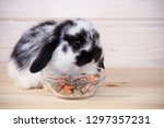 Little Rabbit Eating Food On A...