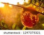 the deserted beehive is set in... | Shutterstock . vector #1297375321