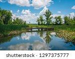 Wetland Along The Mount Vernon...
