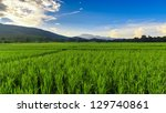 Green Rice Field With Mountain...