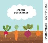 fresh organic vegetable garden... | Shutterstock .eps vector #1297443451
