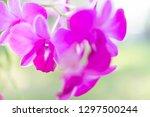 fresh crisp purple orchids... | Shutterstock . vector #1297500244