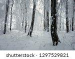 cold woods landscape  frozen... | Shutterstock . vector #1297529821
