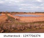 bawdsey pools  east lane ... | Shutterstock . vector #1297706374