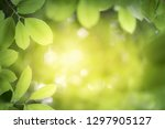 image nature of green leaf on... | Shutterstock . vector #1297905127