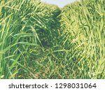 close up of green leaves of... | Shutterstock . vector #1298031064
