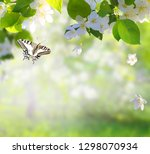 apple tree blossoms with green... | Shutterstock . vector #1298070934