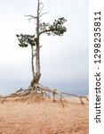 lonely tree with half dry and... | Shutterstock . vector #1298235811