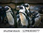 the beautiful wildlife   Shutterstock . vector #1298303077