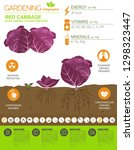 red cabbage beneficial features ... | Shutterstock .eps vector #1298323447