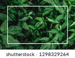 creative layout made of flowers ... | Shutterstock . vector #1298329264