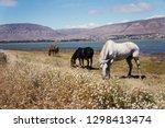beautiful scenic view of wild... | Shutterstock . vector #1298413474