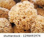 Natural Sea Sponges With...