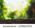 fresh green plant growing tree... | Shutterstock . vector #1298602591