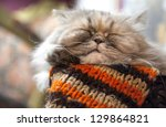 Long Haired Persian Cat Sleeps...