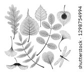 vector set of high detailed... | Shutterstock .eps vector #1298754994