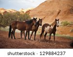 Horses In The Monument Valley ...