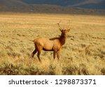 Large Elk Deer With Antlers...