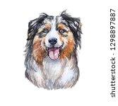 drawing australian shepherd dog ... | Shutterstock . vector #1298897887