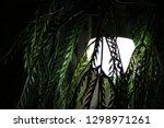 watcher in the night | Shutterstock . vector #1298971261