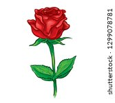 red rose flower vector... | Shutterstock .eps vector #1299078781