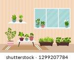 house indoor vector plants and... | Shutterstock .eps vector #1299207784