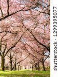 amazing bright colorful spring... | Shutterstock . vector #1299395077
