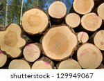 timber in forest | Shutterstock . vector #129949067