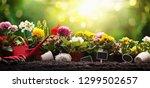 garden flowers  plants and... | Shutterstock . vector #1299502657