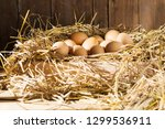Fresh Eggs From Egg Farms...