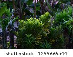 a bright  cool green colored... | Shutterstock . vector #1299666544