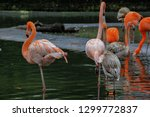 Park Of Pink Flamingos With...