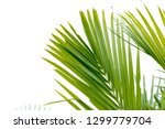 green palm leaves summer... | Shutterstock . vector #1299779704